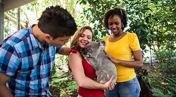 Get up close with a koala, kangaroo and other Australian wildlife at the Lone Pine Koala Sanctuary